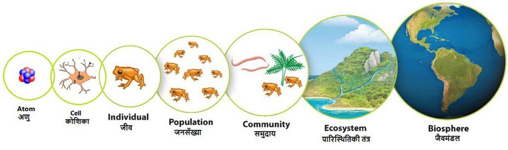 Level of ecologica organisation